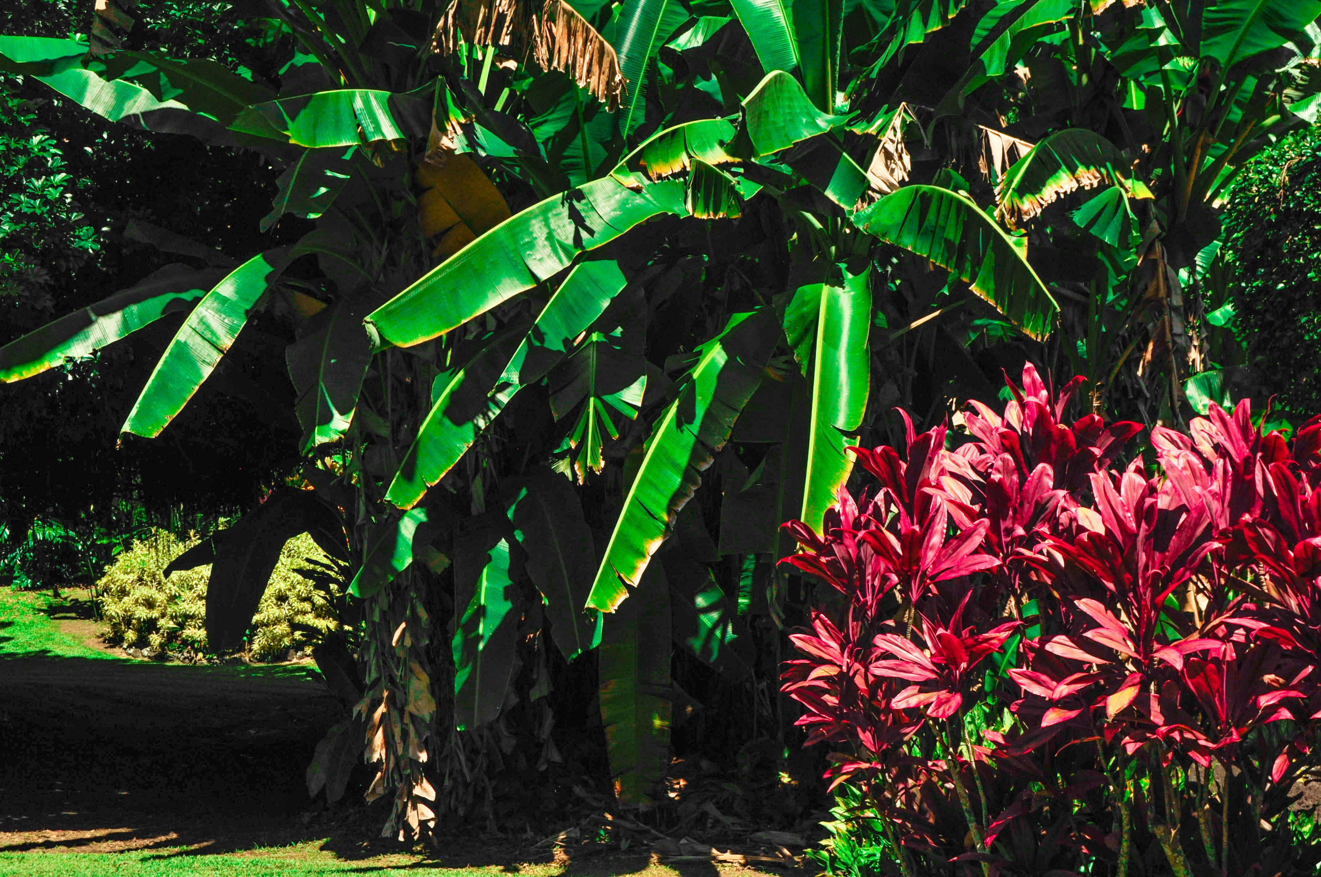 Gardens-On-The-Road-To-Hana